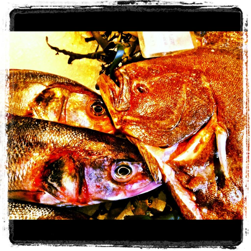fish@85